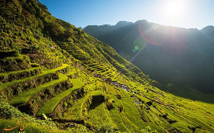 مرزعه پلکانی برنج