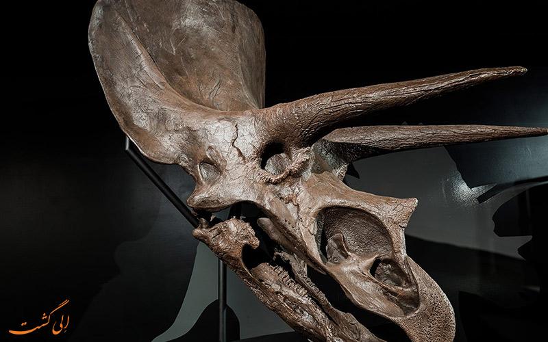 فسیل های به جا مانده از دایناسور ها