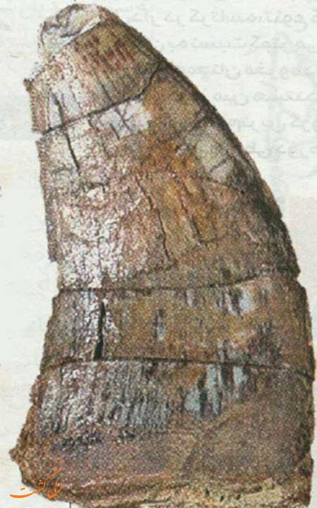 دندان پیدا شده دایناسور در ایران