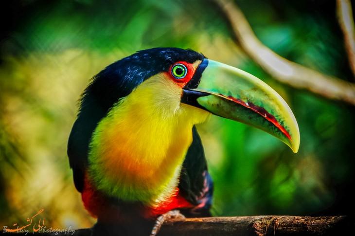 پارک ملی ایگواسو