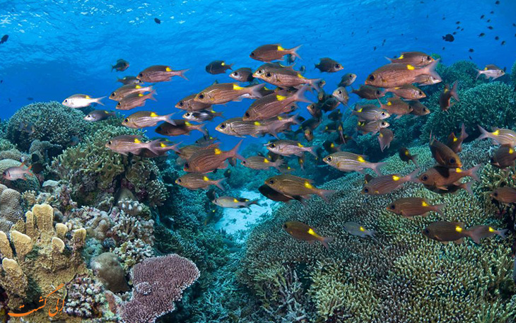 صخره های دریایی