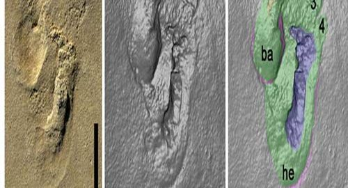 قدیمی ترین انسان نمای جهان