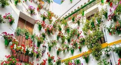 فستیوال گل کوردوبا