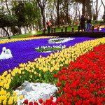 برگزاری جشنواره گل لاله استانبول در اردیبهشت ۹۶
