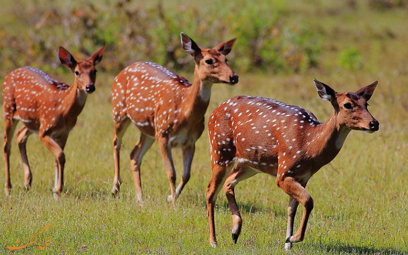 پارک ملی Wilpattu