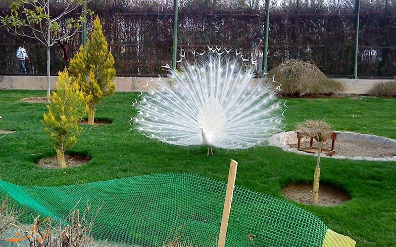 از پرندگان باغ پرندگان اصفهان