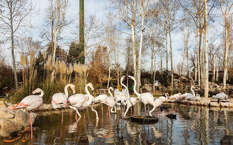 پرندگان دریاچه