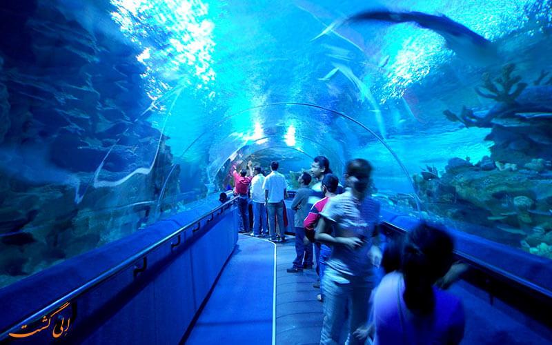 تونل آبی آکواریوم