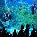 سفری در زیر آب با آکواریوم کی ال سی سی کوالالامپور