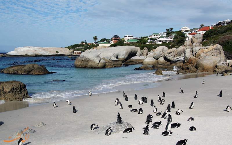 ساحل پنگوئن ها