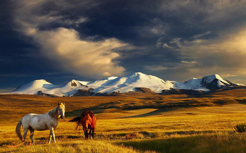 اسب های مغولستان