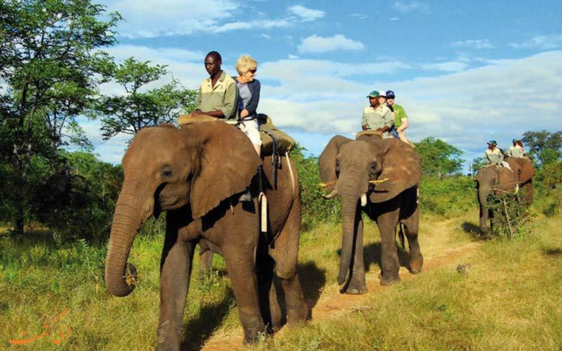 حیوانات عظیم الجثه در آفریقای جنوبی