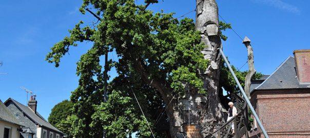 کلیسای درختی