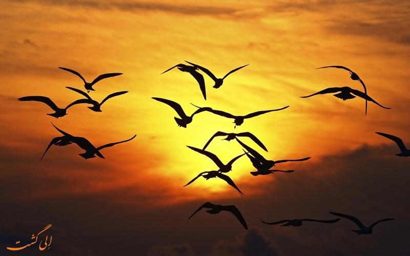 پدیده خودکشی پرندگان در روستای جاتینگا