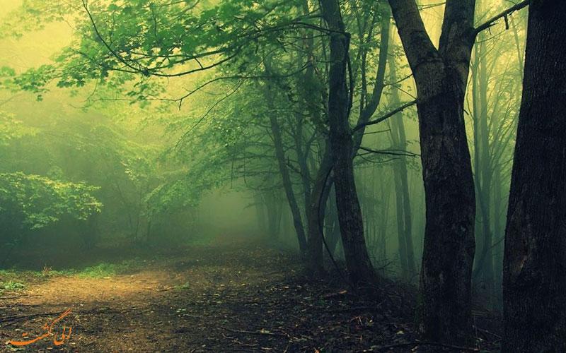 جنگل هویا باچو (Hoia Baciu Forest) در رومانی