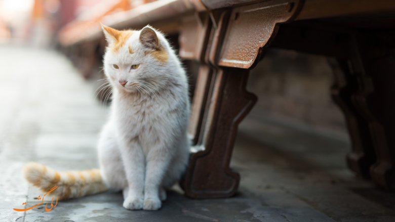 گربه های شهر ممنوعه