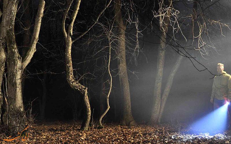 جنگل رومانی