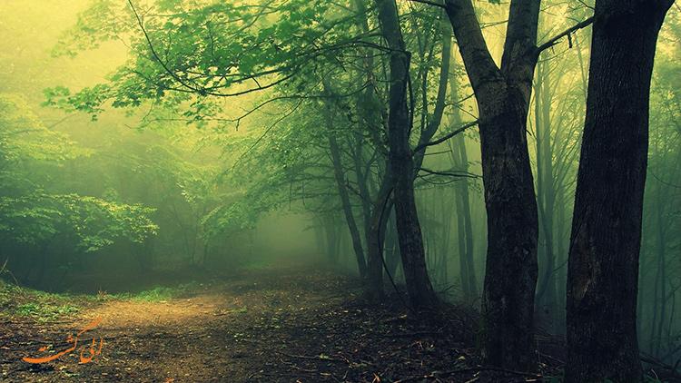 جنگل هویا   ترسناک ترین مناطق دنیا