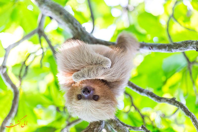حیات وحش کاستاریکا