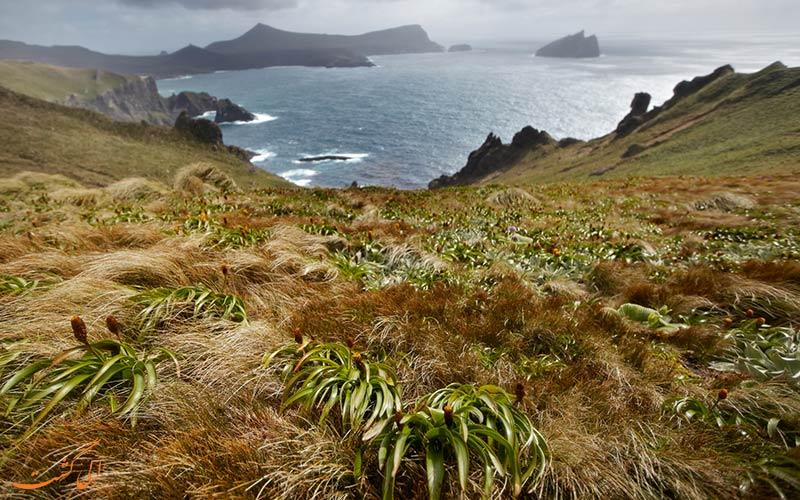 جزیره دورافتاده نیوزلند