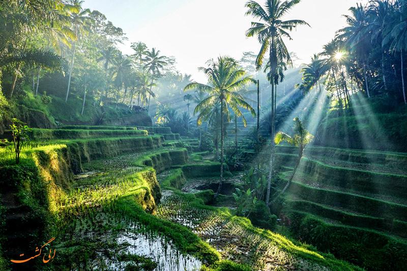 بالی| شهرهای ارزان جهان