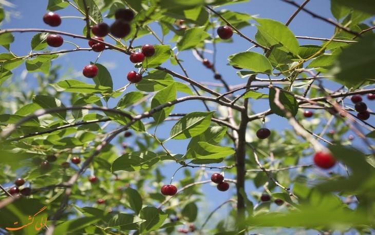 گیاهان طبیعت ازبکستان