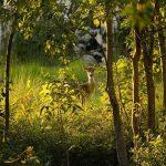 سفر به جنگل های سونداربانس در مرز بنگلادش و هند