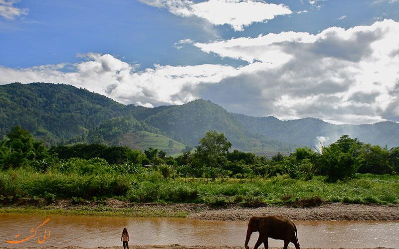 حمایت از فیل های تایلند