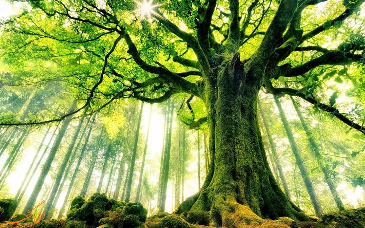 فواید درخت