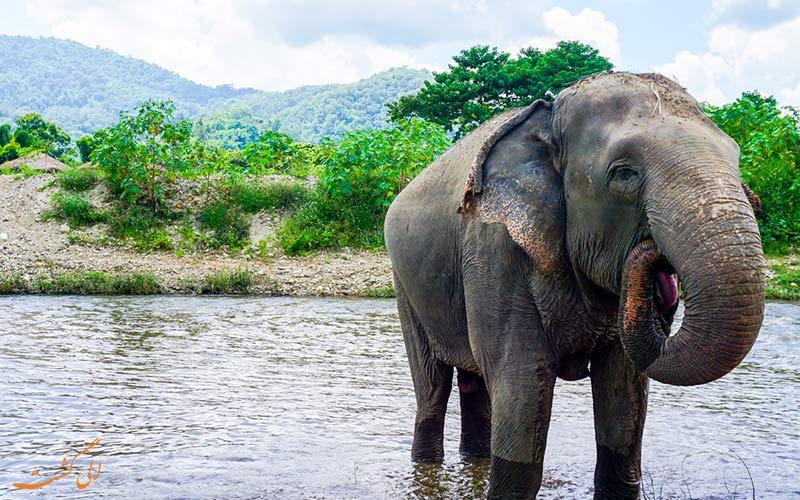 بازدید از فیل های تایلند