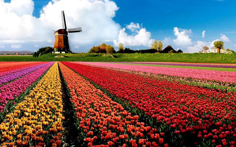 فستیوال گل در آمستردام