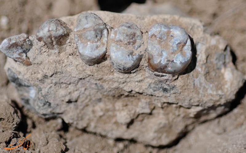 فسیل های کشف شده