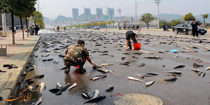 عکس باران ماهی و قورباغه