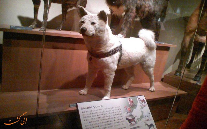 موزه علم و طبیعت توکیو