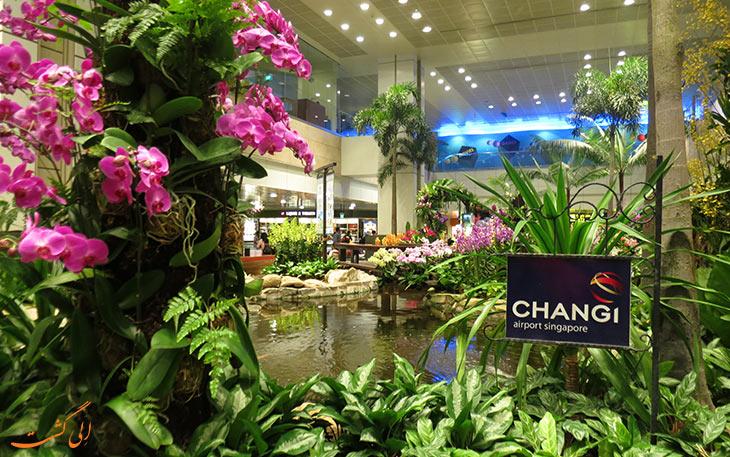 تفریحات غیر معمول در فرودگاه: باغ فرودگاه چانگی
