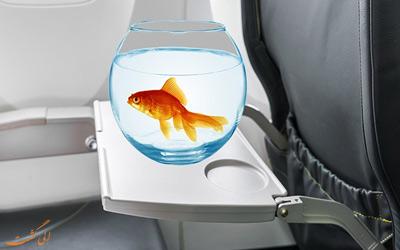 ماهی قرمز در هواپیما