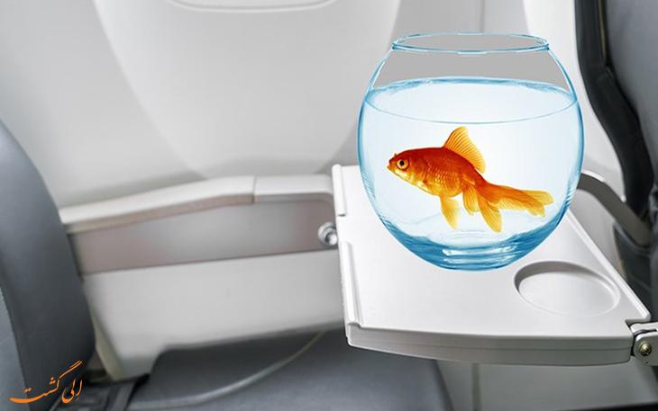 ماهی قرمز در پرواز