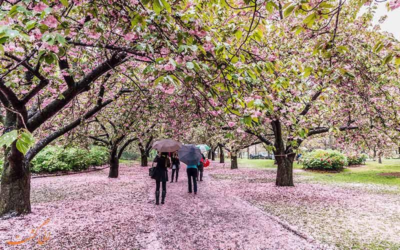 باغ گیاهشناسی بروکلین