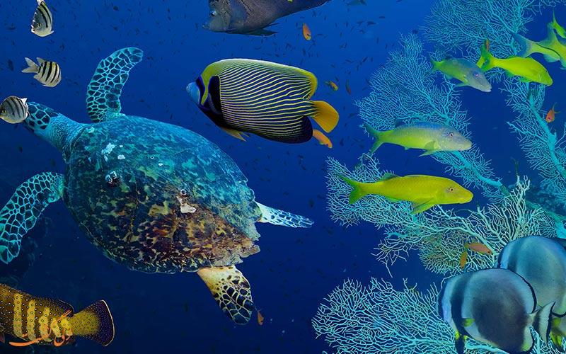 کشفیات اسرار آمیز دریا