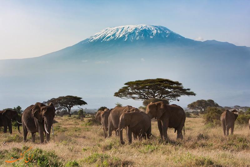 کوه کلیمانجارو تانزانیا