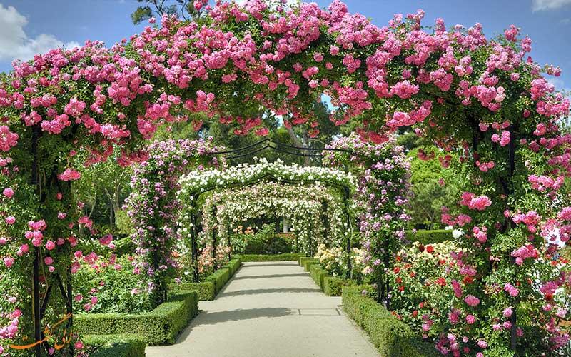 باغ گل سرخ