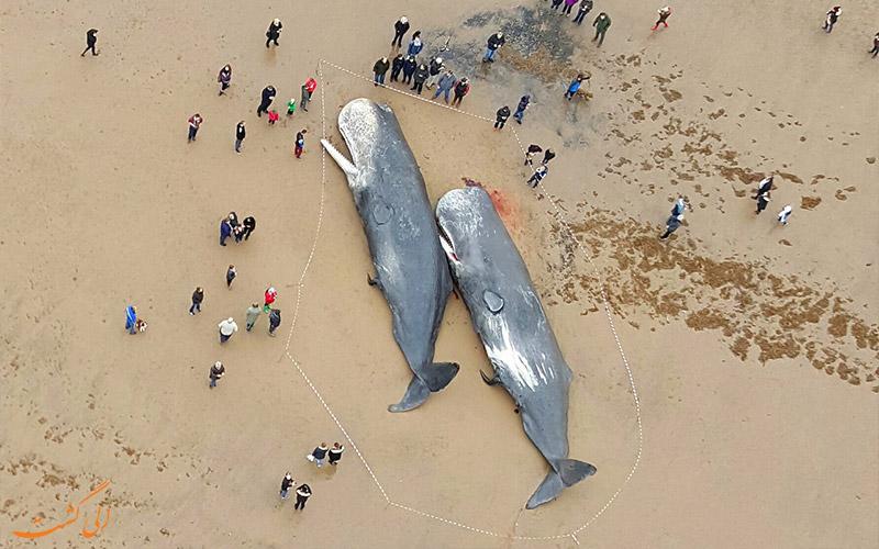 دلایل خودکشی نهنگ ها چه می تواند باشد؟