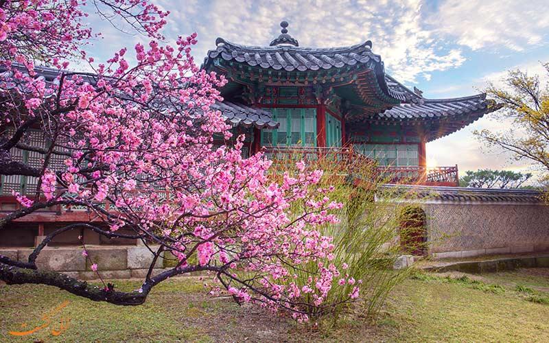 کاخ چانگ دیوک گونگ سئول در بهار