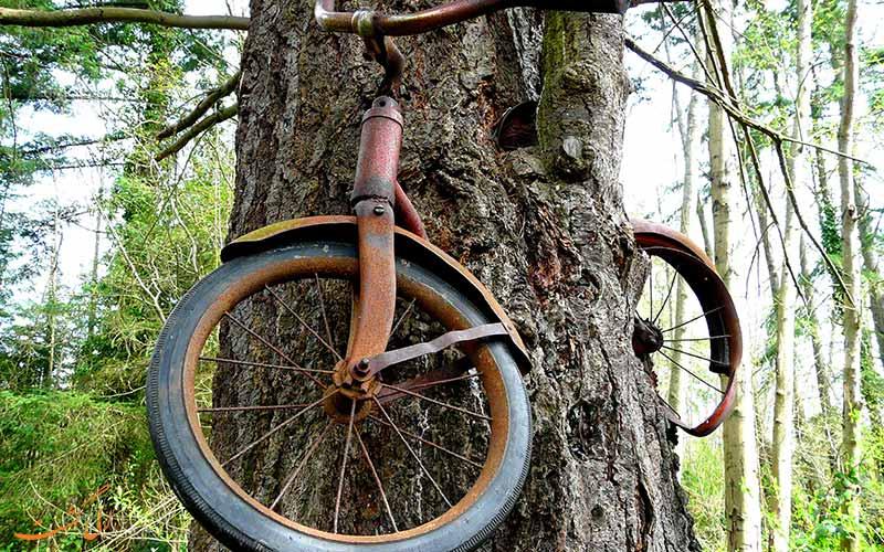 درخت دوچرخه