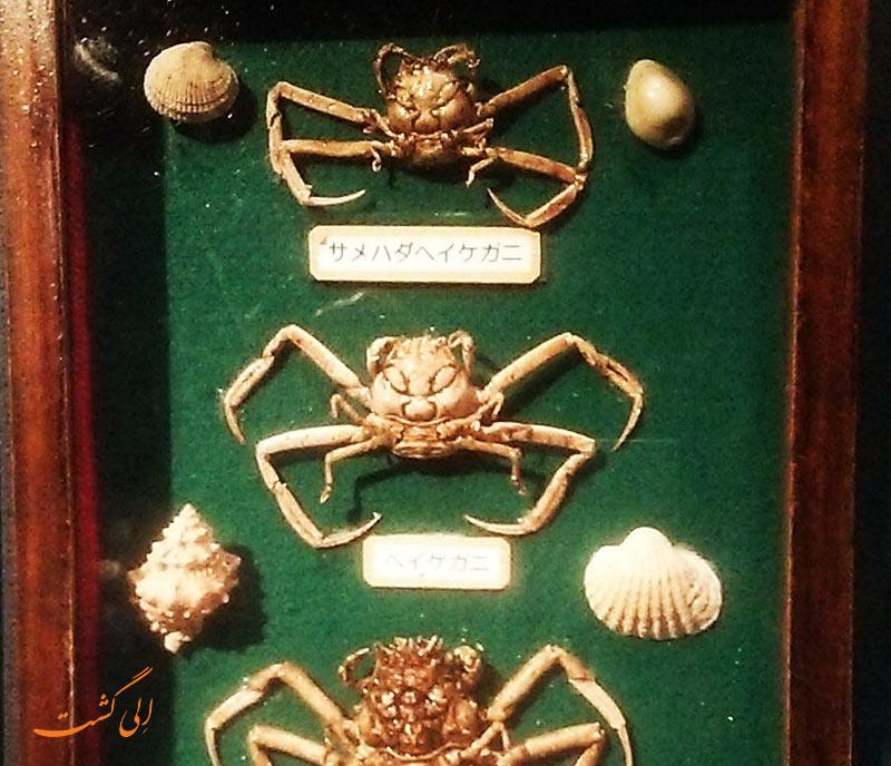 خرچنگ شبیه انسان هیکه