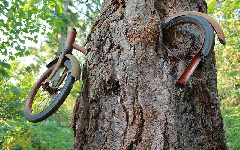 گم شدن فرمان دوچرخه