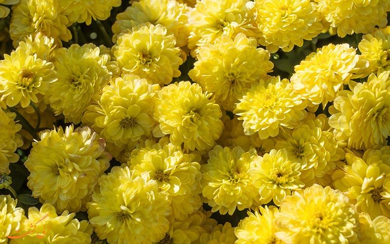 گل های خاص باغ