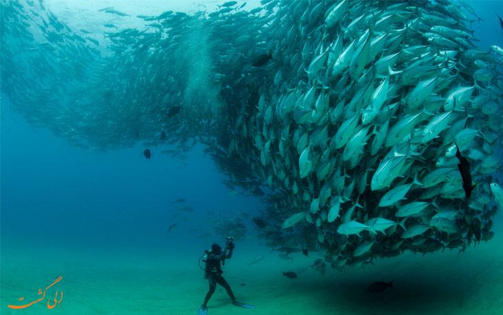 ماهیان در اعماق اوقیانوس
