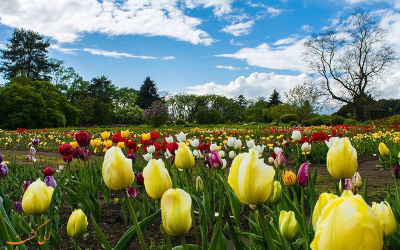 گل های رنگارنگ باغ گیاهشناسی مینسک