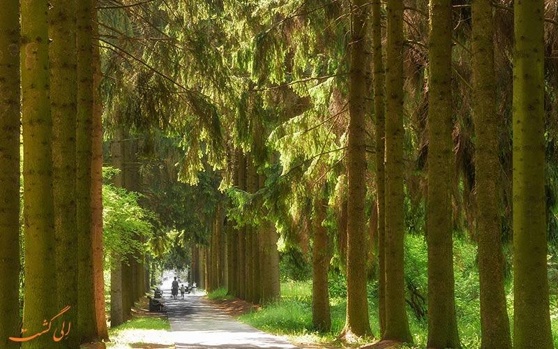 درختان دو طرف